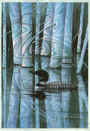 Loon Shadow, Sue Coleman